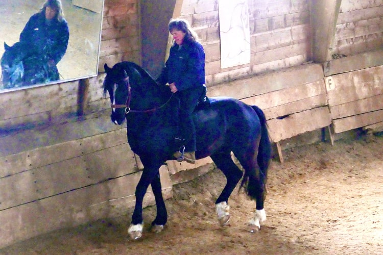 Jean Blatti chevauchant un superbe cheval noir dans sont école d'équitation à Château-d'Oex