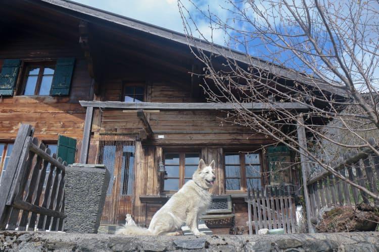 Un chien a proximité de la maison dortoir pour les camps d'équittion au manège de Château-d'Oex - Jean Blatti